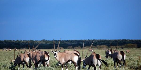 Africa - Botswana - Wildlife