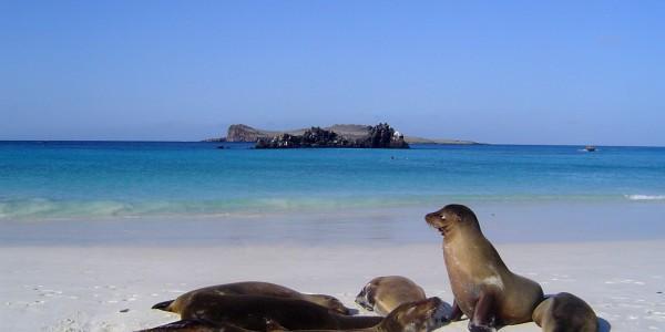 Sea Lions, Galapagos