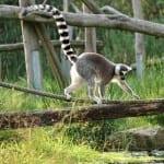 South-East Madagascar - Madaclassic