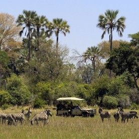 Okavango wildlife safari