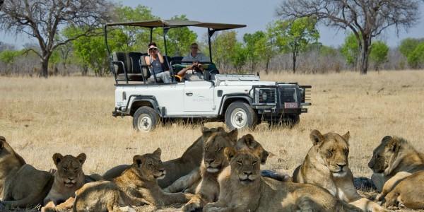 davisons camp.lion viewing