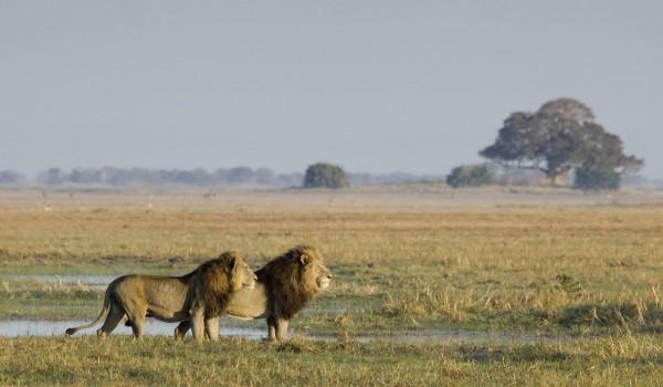 wilderness safaris.kafue
