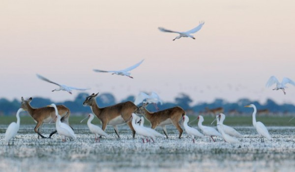 Bangweulu-Wetlands-Zambia-lechwe-shoebill island camp