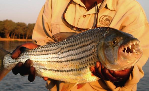 CHIAWA-CAMP-Fishing