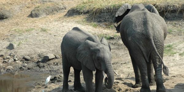 DSC_1850 Elephants