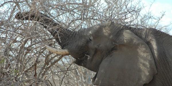 DSC_2251 Elephant