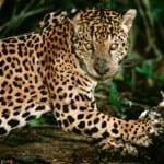 Wildlife & National Parks