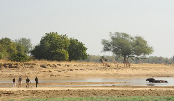 Norman Carr - walking safari