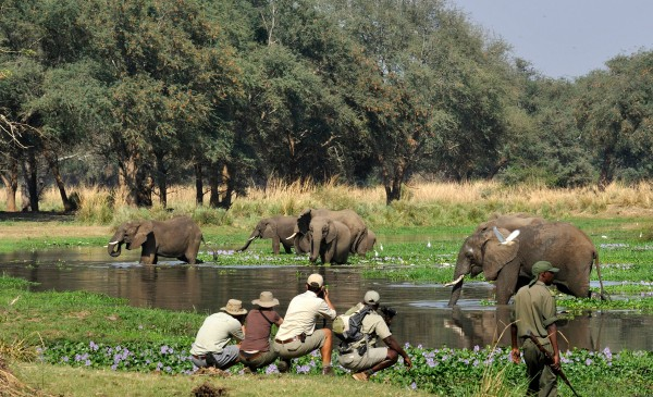 Old-Mondoro---walking-safari-elephant-encounter