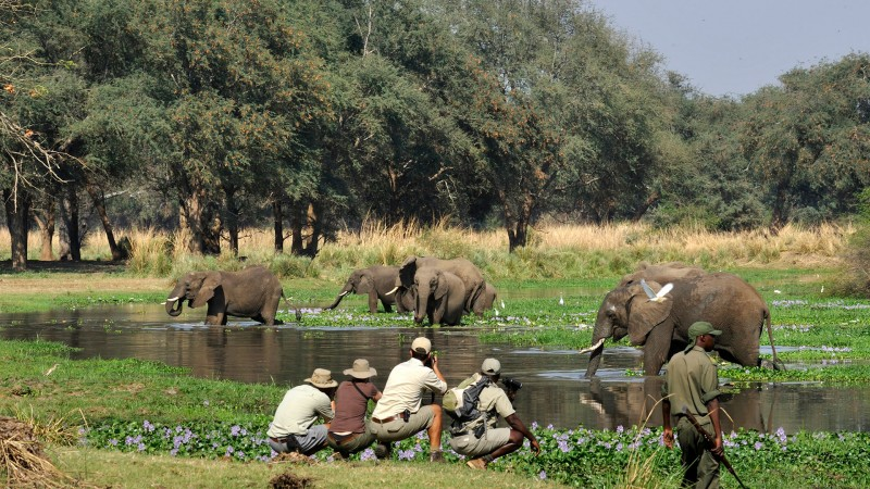 Old-Mondoro---walking-safari-elephant-encounter