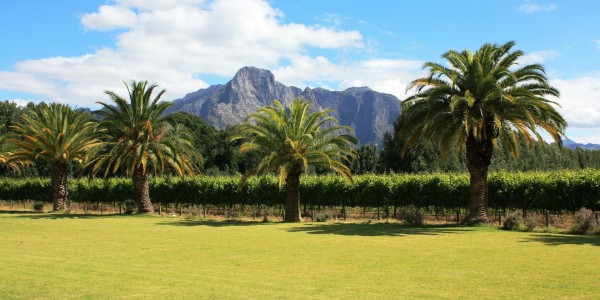 South Africa - Winelands