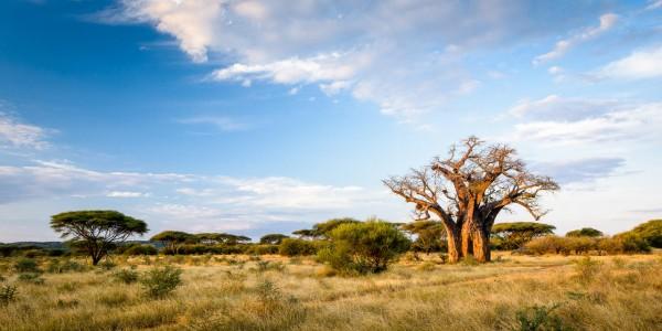 Zimbabwe - Malilangwe Private Wildlife Reserve - Landscape