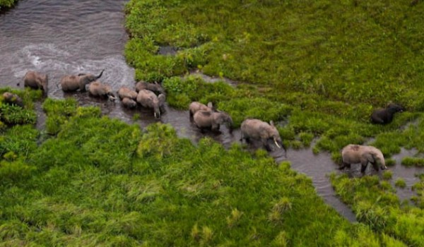 An aerial view of elephants.shoebill island camp