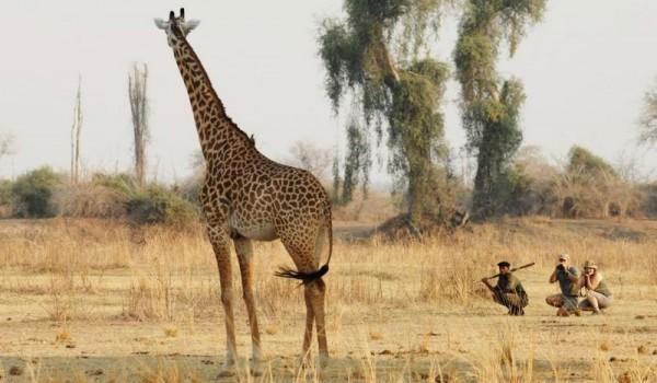 Remote Africa Safaris walking safari