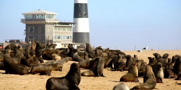 pelican point, seals