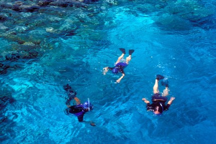 snorkeling in turneffe atoll belize