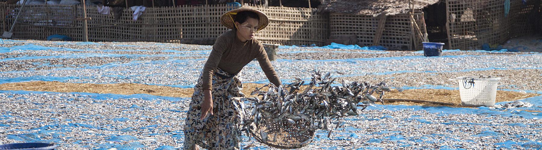 Ngapali fisherman
