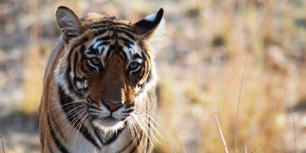 Sher Bagh Ranthambore Mar 09 (10)