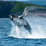 Baja Peninsula & Whale Watching