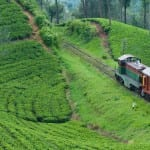 The Tea Country & Nuwara Eliya