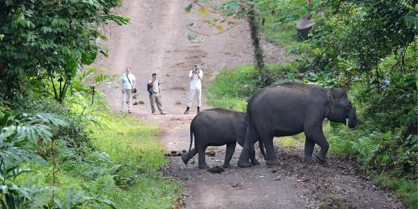 Credit: Borneo Rainforest lodge