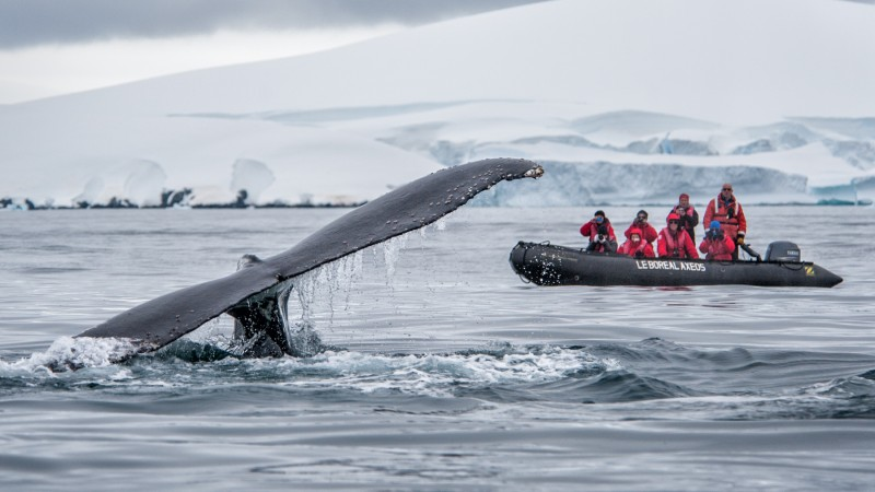 Antarctica - Gen - Boreal - Whale and zodiac by Lorraine Turci