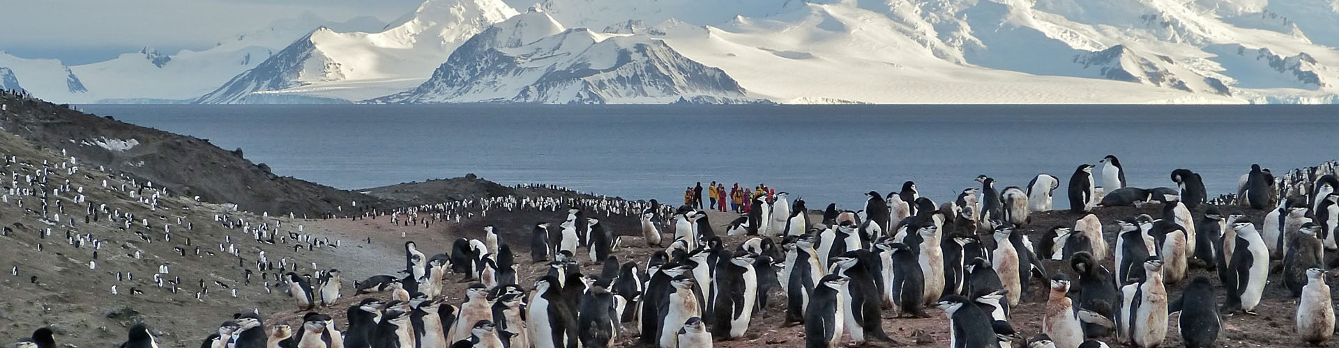 Antarctica - Peninsula - Hebridean Sky - Chinstrap colony with icebergs sunset