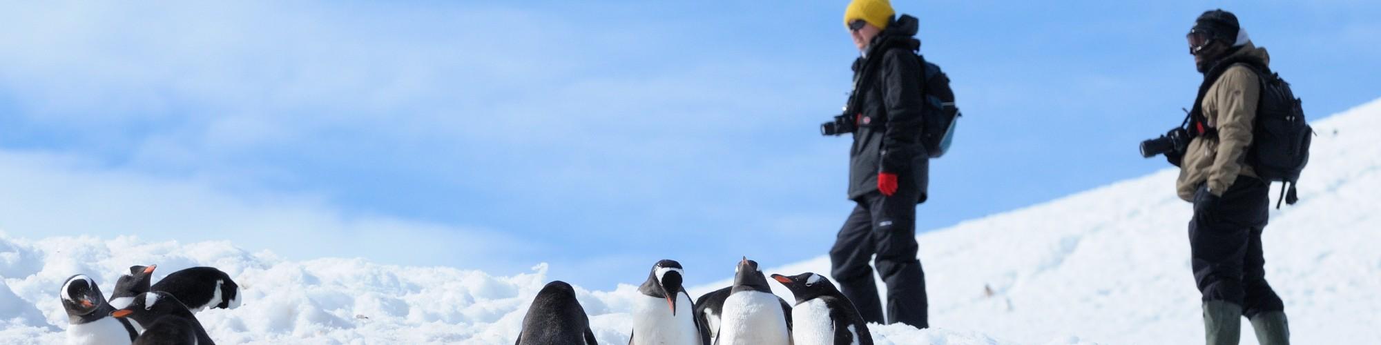 Antarctica December 2010, PLA023, Antarctic Peninsula with South Shetlands, Plancius: Danco Island