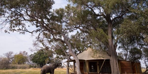 Botswana - Okavango Delta - Xaranna Okavango Delta Camp - Wildlife
