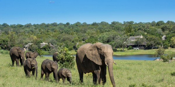South Africa - Kruger National Park & Private Game Reserves - Chitwa Chitwa Game Lodge - Elephant