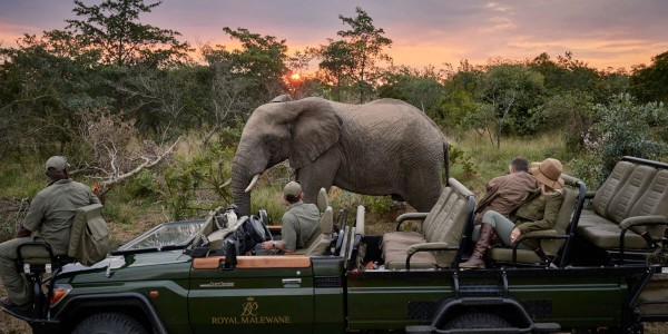 South Africa - Kruger National Park & Private Game Reserves - Royal Malewane - Elephant