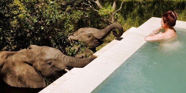 South Africa - Kruger National Park & Private Game Reserves - Royal Malewane - Plunge Pool