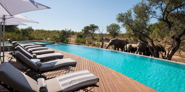 South Africa - Kruger National Park & Private Game Reserves - andBeyond Ngala Safari Lodge - Pool