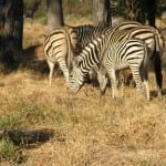 Kruger National Park & Private Game Reserves