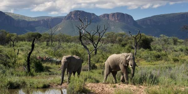 South Africa - Waterberg - Marataba Safari Lodge - Elephant