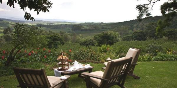 Tanzania - Ngorongoro Crater - Gibbs Farm - Coffee