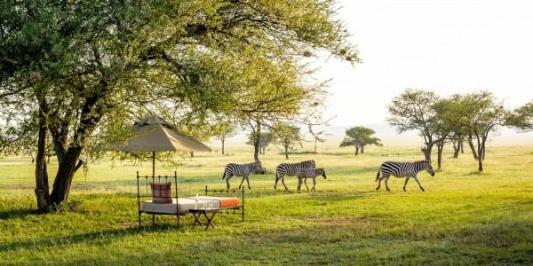 Tanzania - Serengeti National Park - Singita Sabora Tented Camp - Wildlife