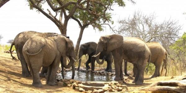 Tanzania - Tarangire National Park - Tarangire Treetops - Waterhole