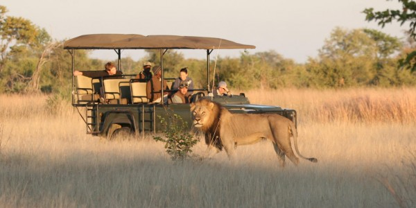 Zimbabwe - Hwange National Park - Camp Hwange - Game Drives