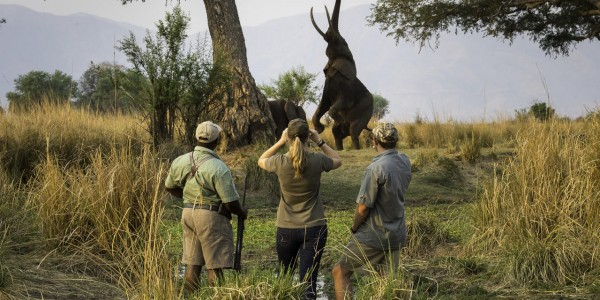 Zimbabwe - Mana Pools National Park - Ruckomechi Camp - Elephant