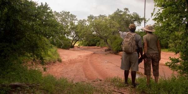 Zimbabwe - Matusadona National Park & Lake Kariba - Rhino Safari Camp - Bush Walk