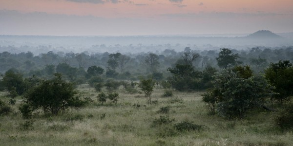 South Africa - Kruger National Park & Private Game Reserves - Londolozi Varty Camp - Landscape