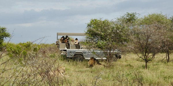 South Africa - Kruger National Park & Private Game Reserves - Singita Lebombo Lodge - Lion
