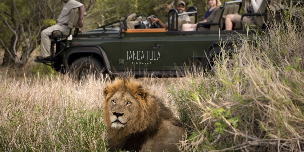 South Africa - Kruger National Park & Private Game Reserves - Tanda Tula Safari Camp - Lion