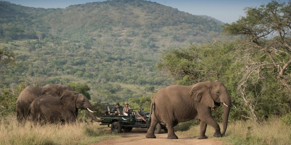 South Africa - Kwazulu Natal - Phinda Rock Lodge - Elephants