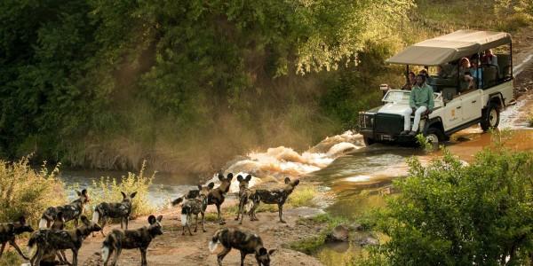South Africa - Madikwe Game Reserve - Morukuru Family - Game Drive