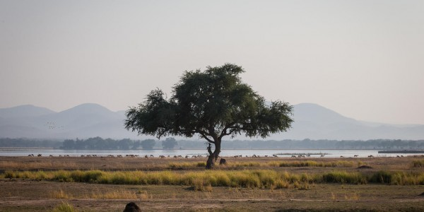 Zimbabwe - Mana Pools National Park - Chikwenya - Plains