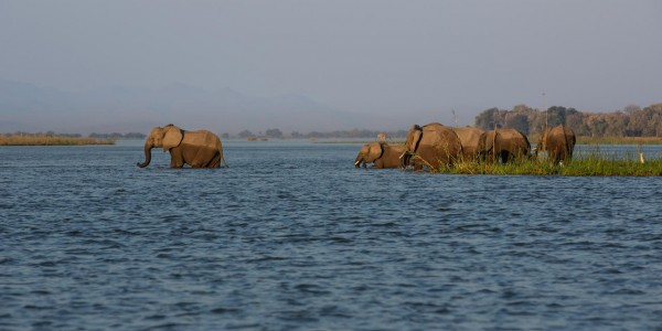 Zimbabwe - Mana Pools National Park - Greater Mana Expedition - Elephant