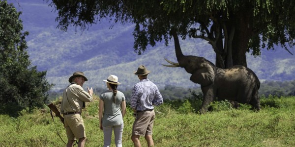 Zimbabwe - Mana Pools National Park - John's Camp - Elephant