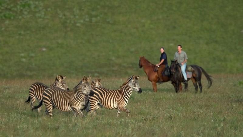 Botswana - Riding Safari - Dana Allen